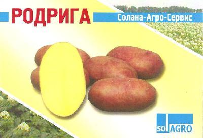 Картофель сорт императрица описание сорта фото